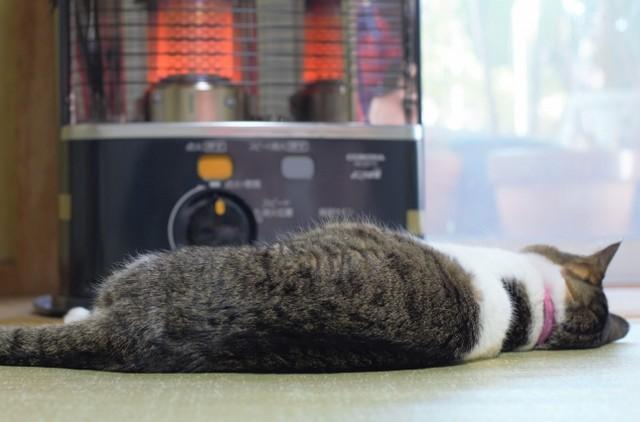 ストーブの前で寝ている猫